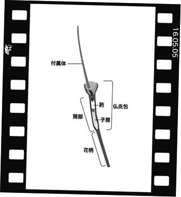 Mkarasub160505-4.jpg
